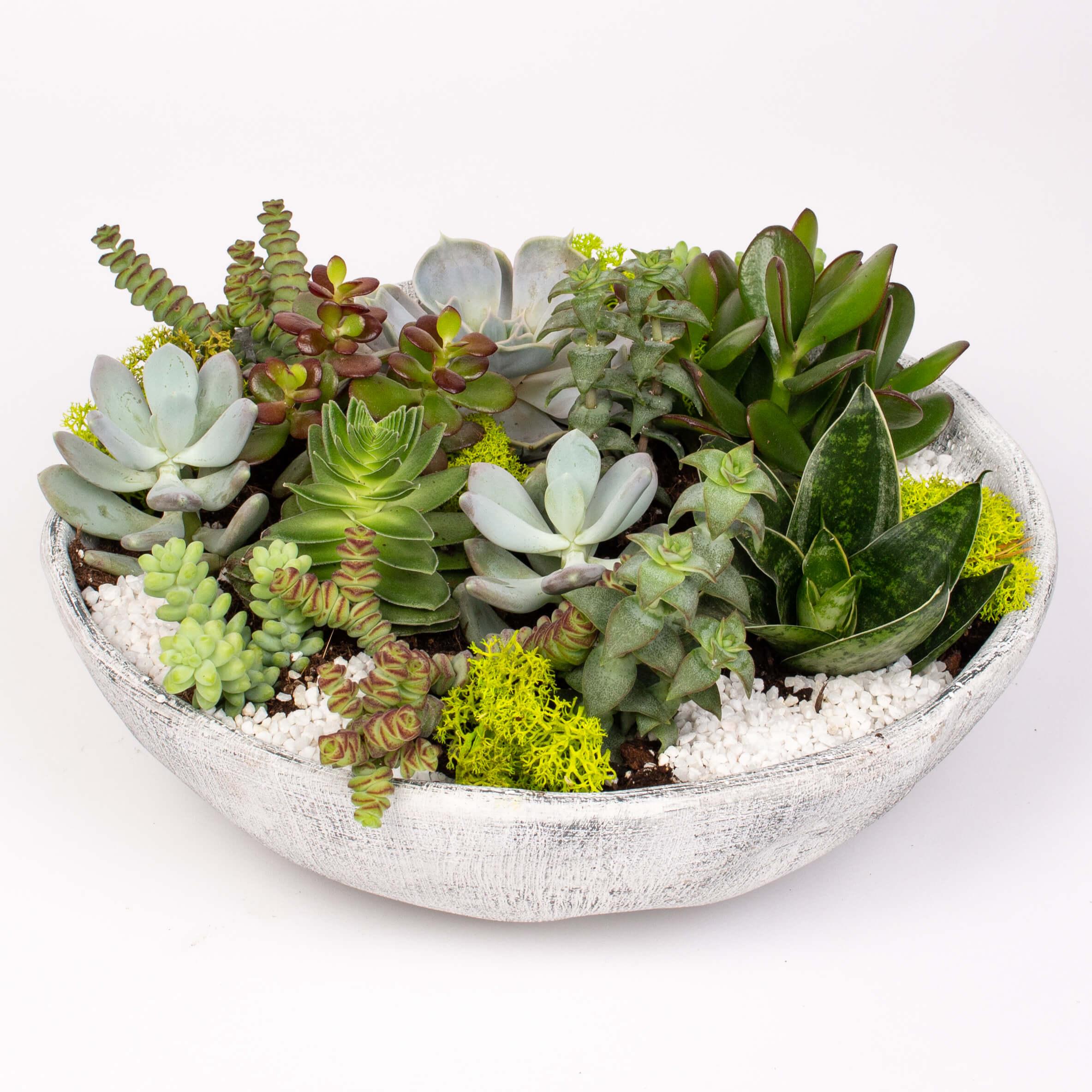 Suculente in bol ceramic
