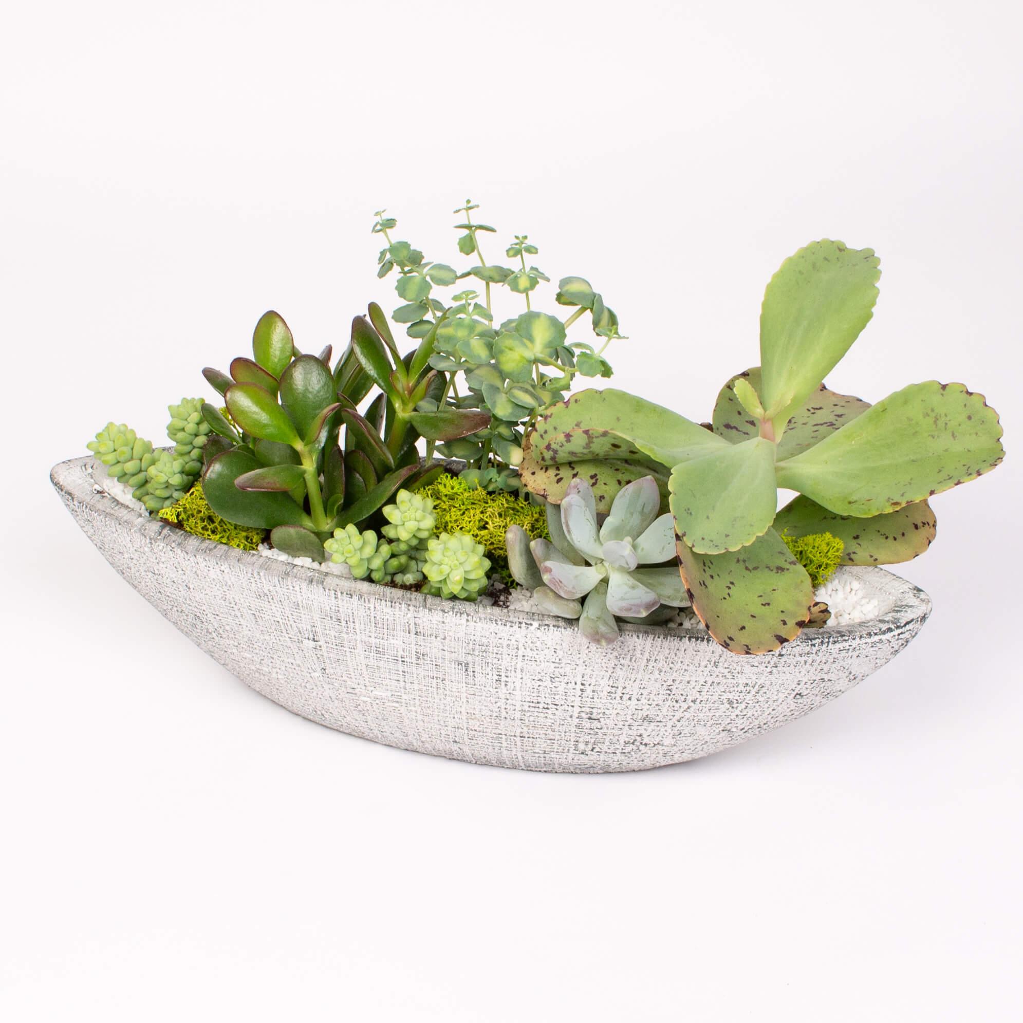 Barca cu plante suculente