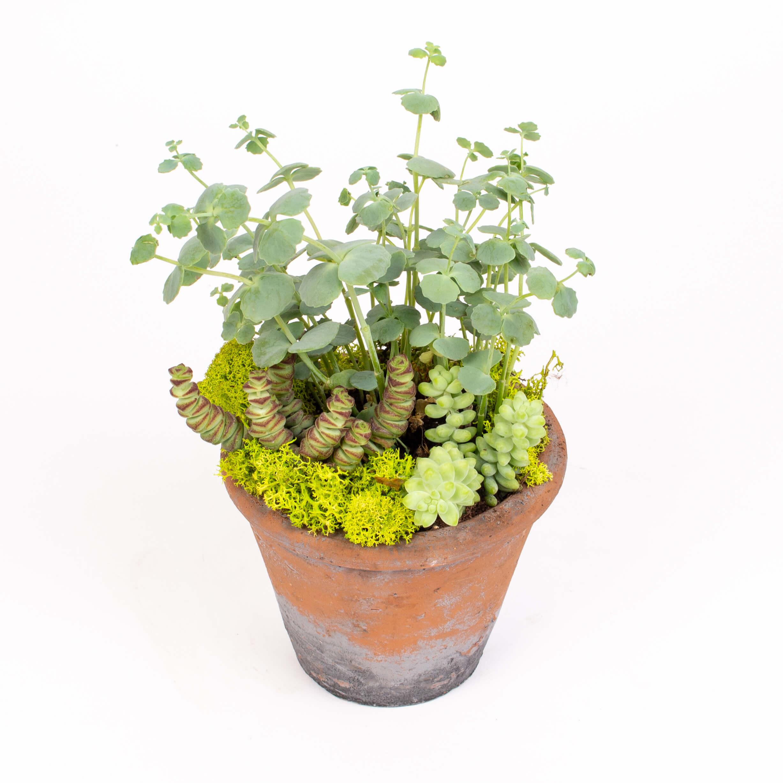 Ghiveci cu plante suculente