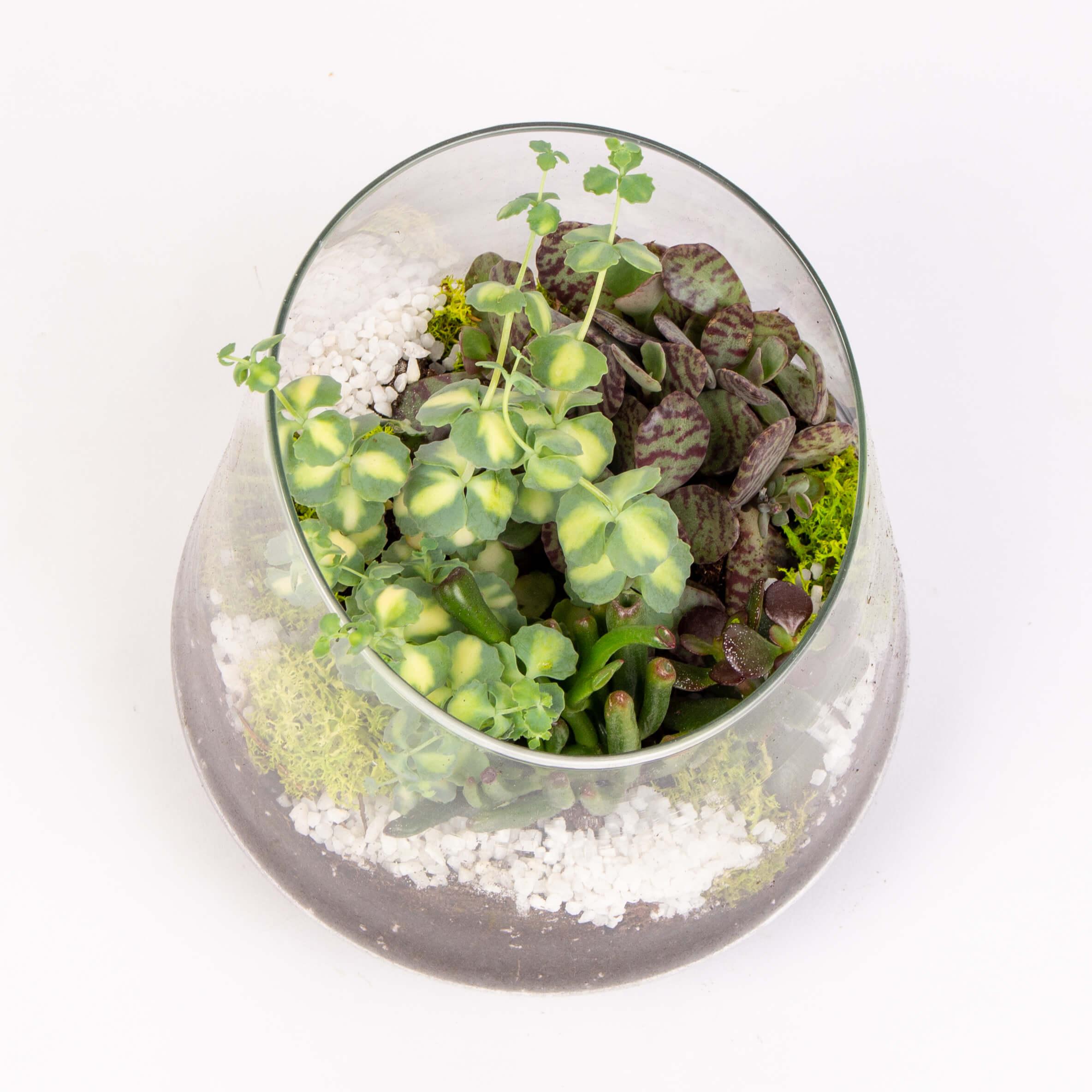 Grasute in vas de sticla