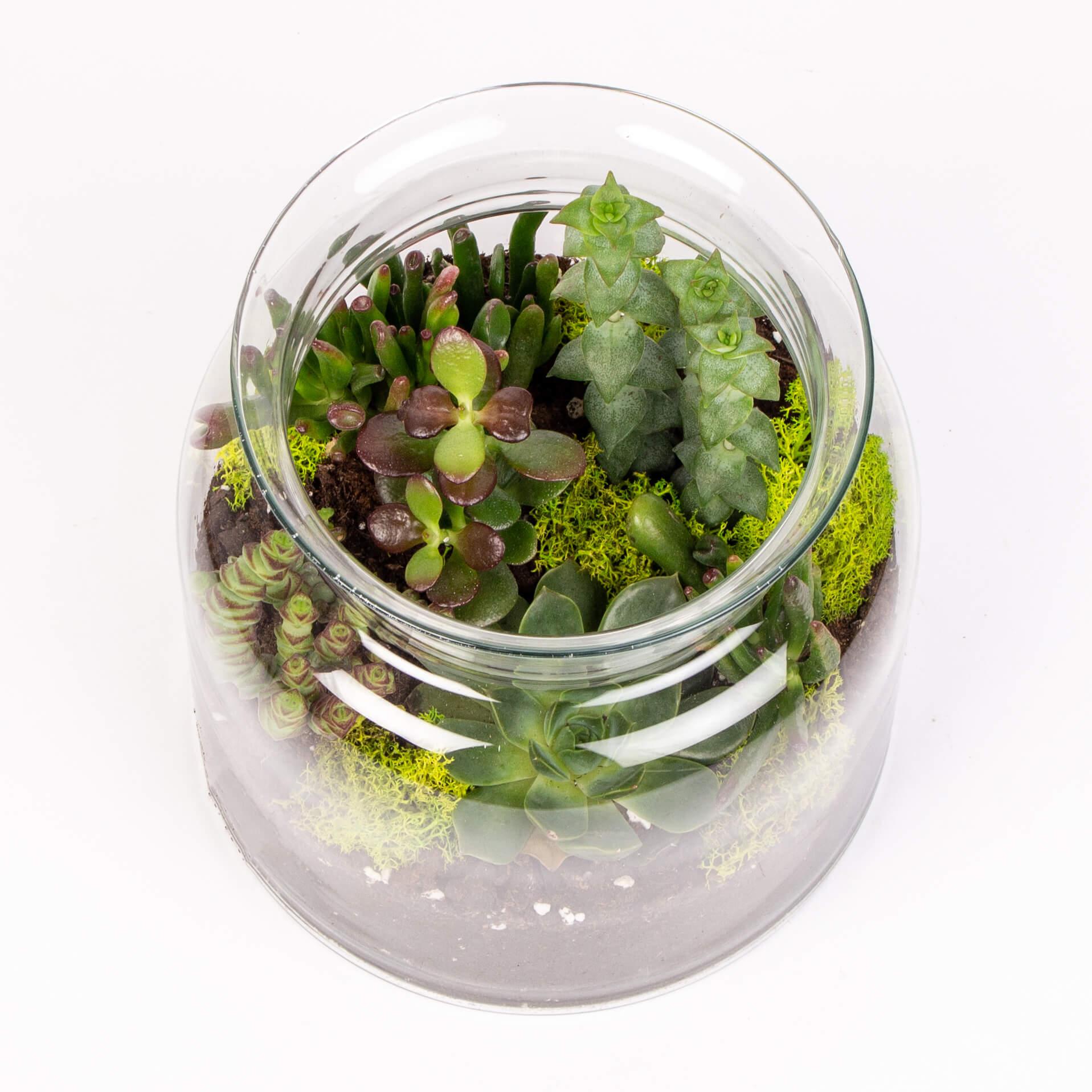 Suculente in borcan sticla