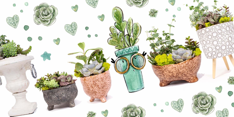 suculente si cactusi