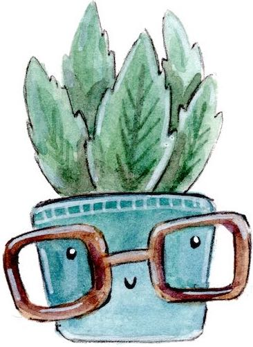 cactusi in ghiveci pret