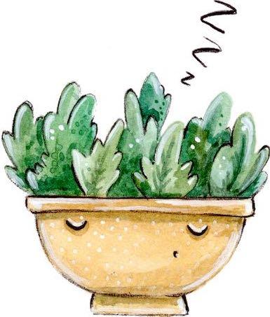 pret cactusi si suculente